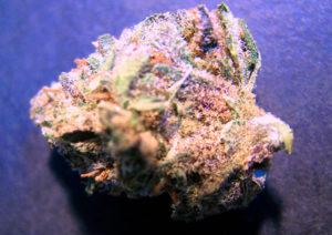 LSD CBD Flower